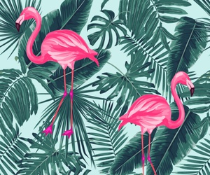 background, flamingo, and pattern image