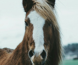 coffee, horse, and animal image