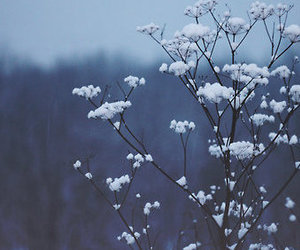 blue, flowers, and plant image