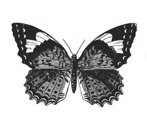 butterfly and black image
