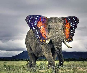 elephant and butterfly image