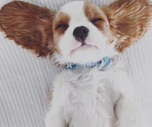 dog, pretty, and white image