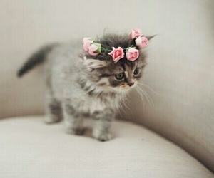 flower crown and kitty image