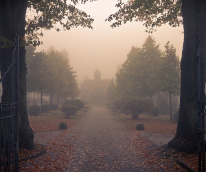 fog, trees, and autumn image