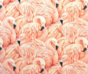 birds, flamingos, and pink image