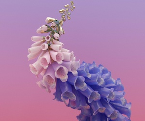flowers, flume, and music image