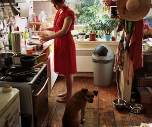 cooking, dog, and kitchen image