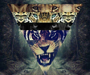 lion, tiger, and animals image