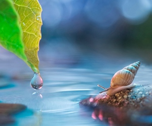 drop, leaf, and water image