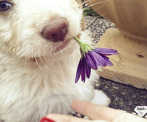 flower, puppy, and cute image