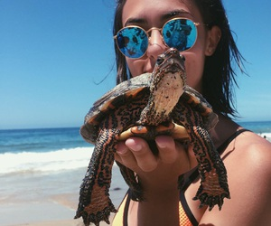beach, indie, and tortoise image