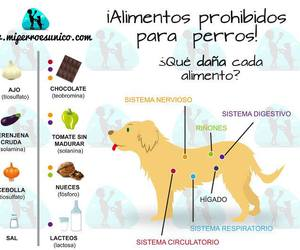 care, dogs, and foods image