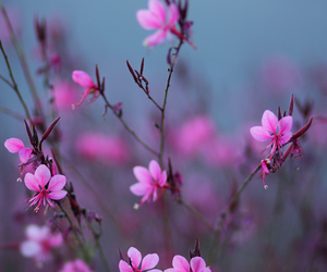 flowers, outdoor, and pink image
