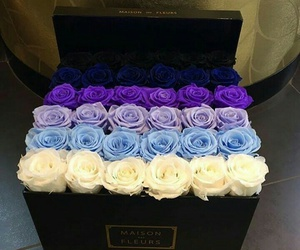 rose, love, and blue image