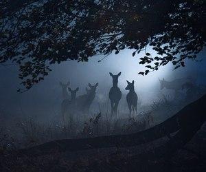 deer, animal, and dark image