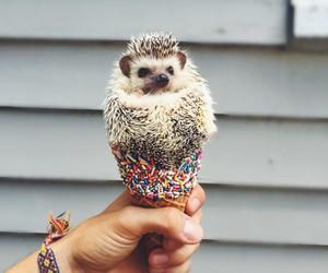 animal, cute, and ice cream image
