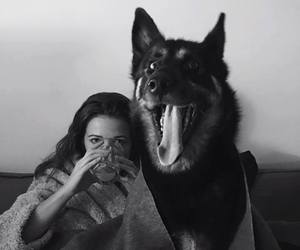 black and white, blanket, and dog image
