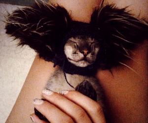 animal, fur, and cat image
