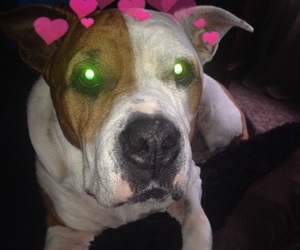 dogs, twitter, and hearts image