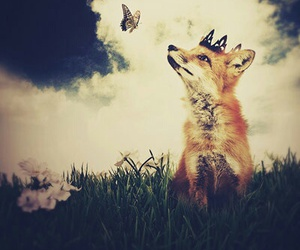 fox, butterfly, and animal image