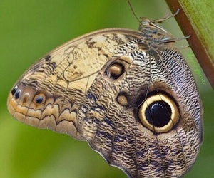 borboleta and butterfly image