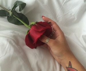 red, rose, and theme image