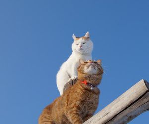 cats and two image