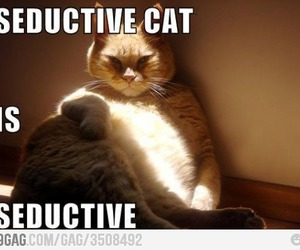 cat, funny, and seductive image