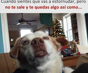 meme, dog, and funny image