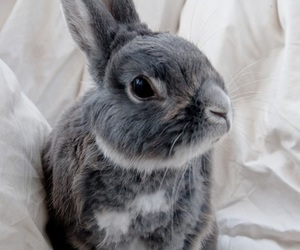 bunny, grey, and white image