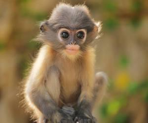 monkey, baby animals, and cute animals image