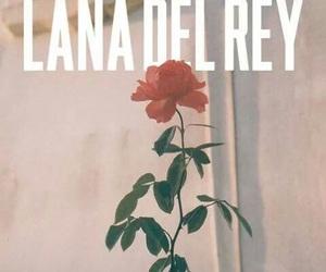lana del rey, rose, and vintage image