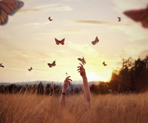 butterflies, freedom, and photography image