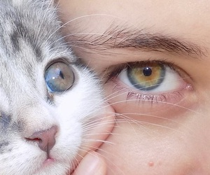 beautiful, eyes, and wow image