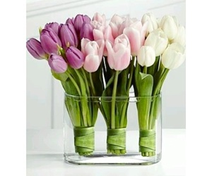 flowers, natural beauty, and tulips image
