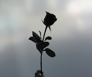grunge, pale, and roses image