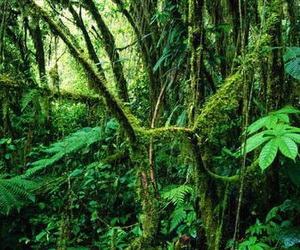 Amazon and forest image