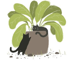 cats, plants, and cute image