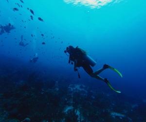 blue, diver, and scuba diving image