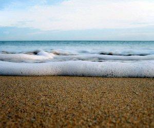 animale, beach, and boy image