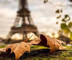 paris, autumn, and leaves image