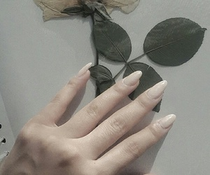 asian, herbarium, and nails image