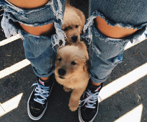 dogs, fashion, and jeans image