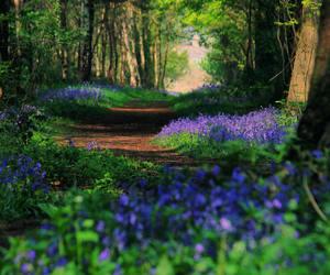 britain, british, and countryside image
