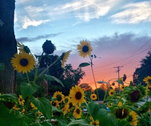 sky, sunflower, and flowers image