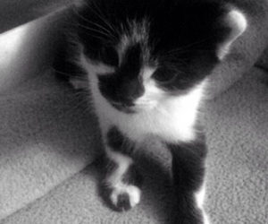 baby cat, black and white, and noir et blanc image