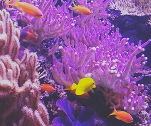 aquarium, art, and coral reef image