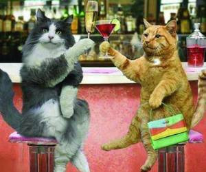 cat and drinks image