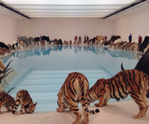 animal, pool, and tiger image