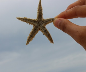 beach, star, and bluesky ​ image